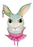 Funky Rabbit_